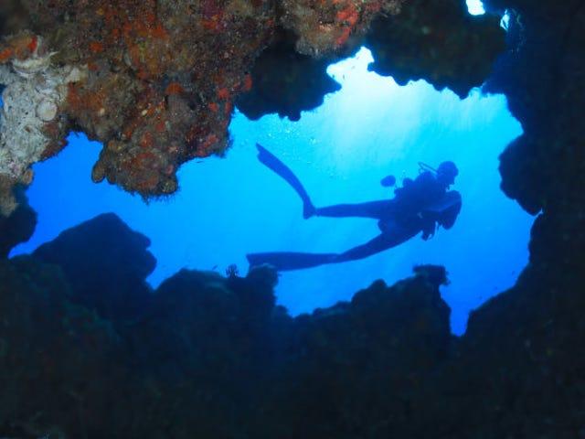 Descubren que nuestras heces son mucho más letales para los corales de lo que pensábamos