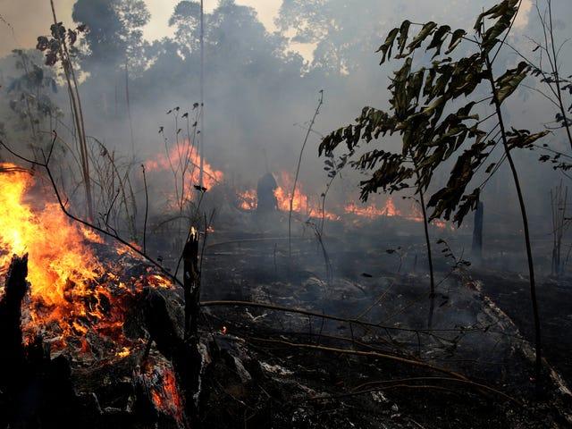 Bolsonaro-regeringen kastar Tantrum, säger att den inte kommer att acceptera Amazon-brandbekämpningsmedel