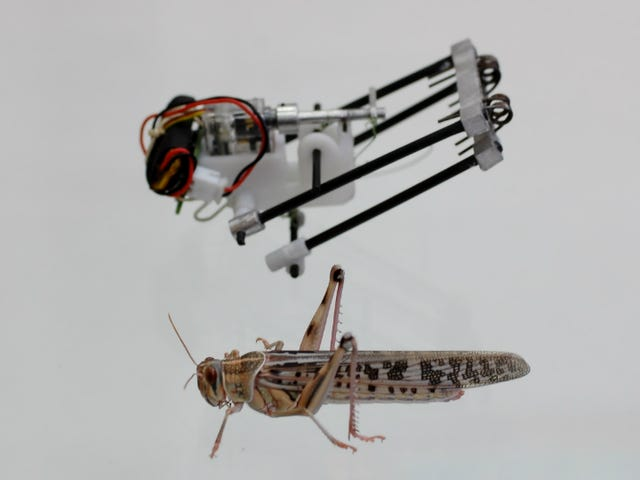 This Locust Robot Jumps 11 Feet High and Could Scour Disaster Zones