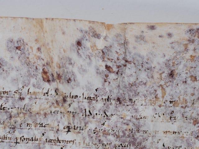 高科技科学解决了800岁的卷轴之谜