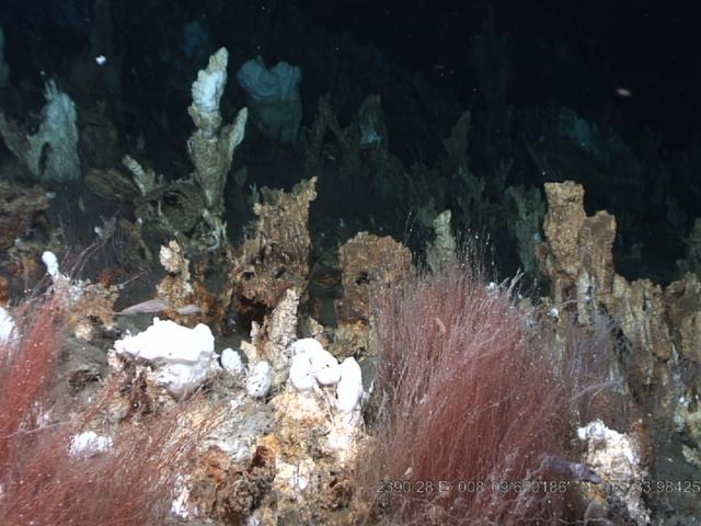 Bizarre Discovery Reveals Chlamydia-Like Bacteria Beneath the Arctic Seafloor