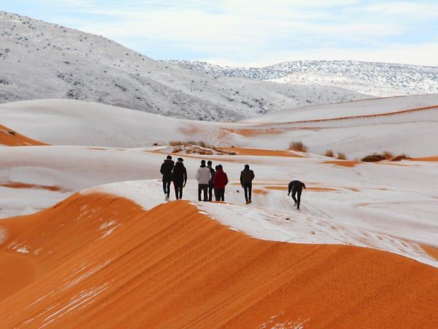 Det snöade i Sahara och bilderna är fantastiska <em></em>