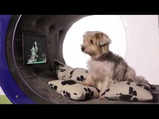 'Dog Kennel Of The Future' Is Even More Insane Than That Title Implies