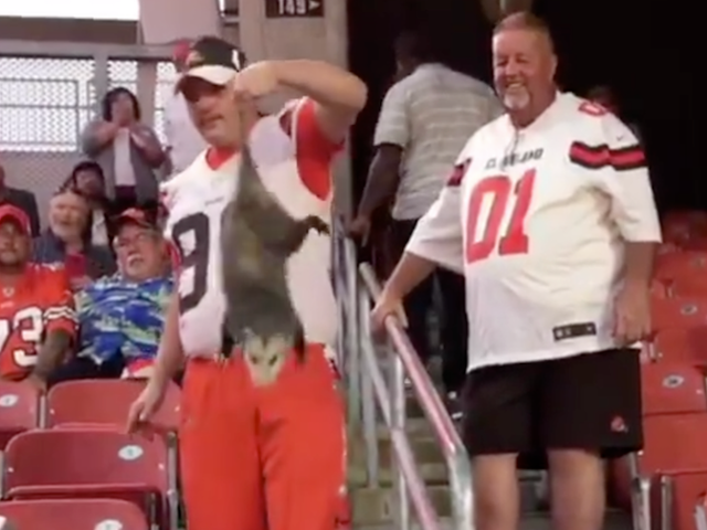 Browns Fan Saves Possum From Having To Watch The Rest Of Thursday Night Football