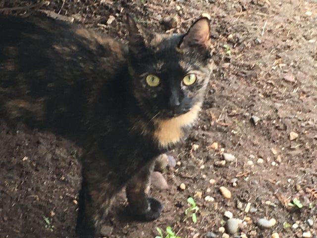 Kitten update!