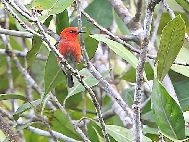 Scientists Describe Trove of New Bird Species on Indonesian Islands