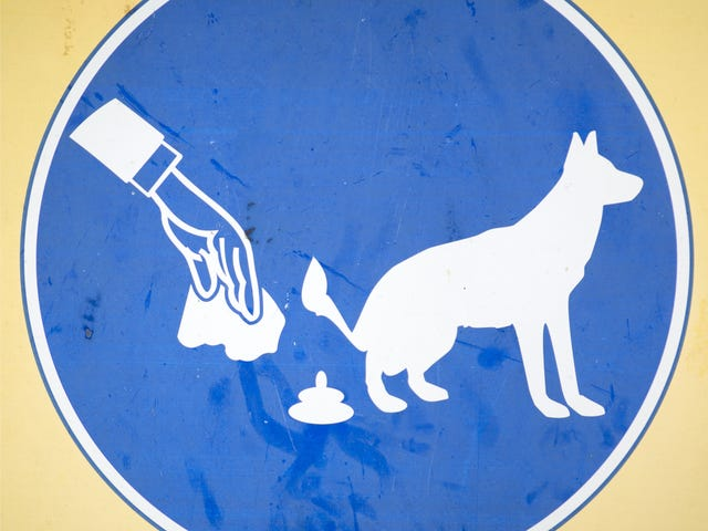 NYC Woman Sues Former Boss for Forcing Her to Pick Up Dog Feces as Revenge Prank