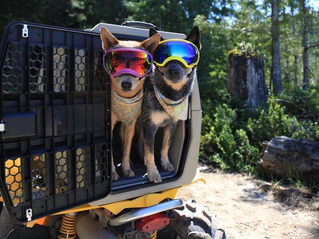 Deze kennel is een veiligere manier om met uw huisdier te reizen