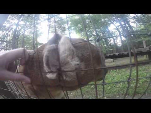 Idiot som hoppet over gjerdet til kjæledyrkuponger, går i fengsel i 4 dager