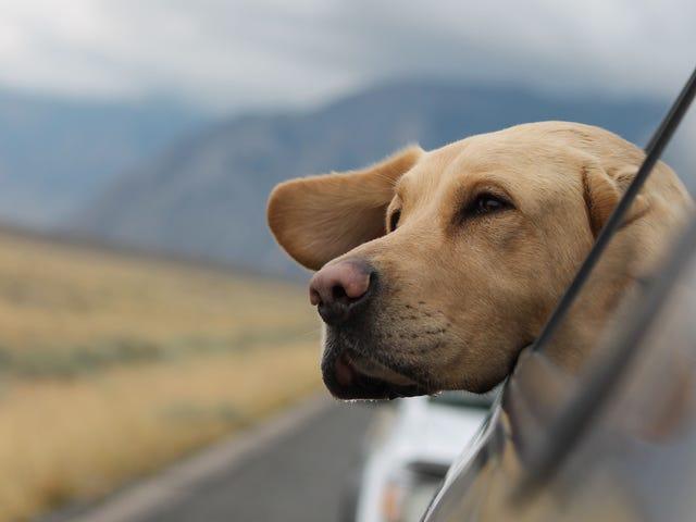 Cómo a prueba de perros su coche
