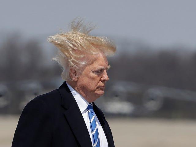 Windswept Honey Bun Boards Presidential Aircraft