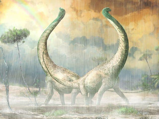 Nyoppdaget afrikansk titanosaur hadde en tydelig hjerteformet halebenet