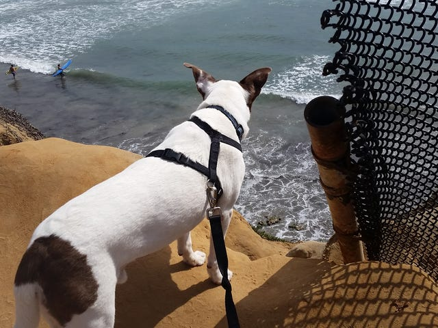 Please send my doggo your best -