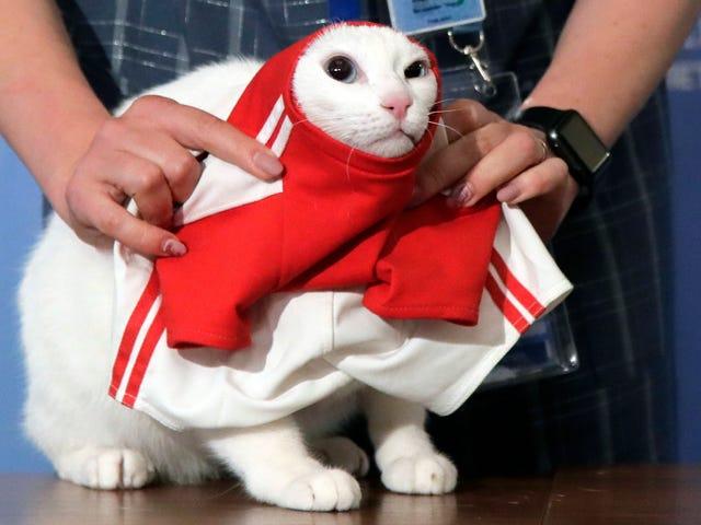 Achilles मानसिक बिल्ली पिक रूस विश्व कप मैच जीतने के लिए रूस क्योंकि वह जानता है कि उसके चूहे मक्खन कर रहे हैं