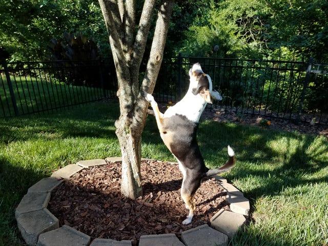Post del cane gratuito