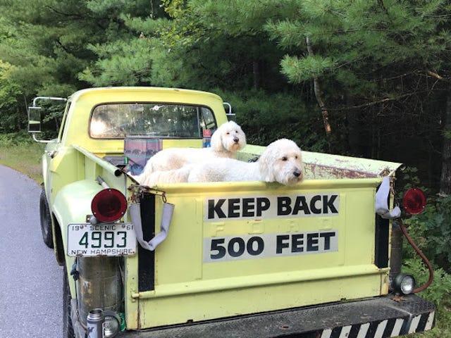Keep Back 500 Feet - Extreme Cuteness