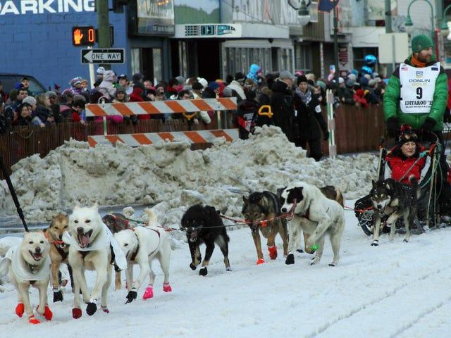 Sesetengah Idiot Jahat Menyerang The Iditarod Frontrunners Dan Bunuh Anjing Sled (UPDATE)