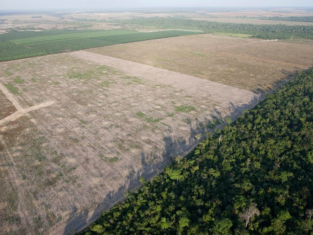 Worrying New Data Suggests Amazon Deforestation Rates Are Spiking
