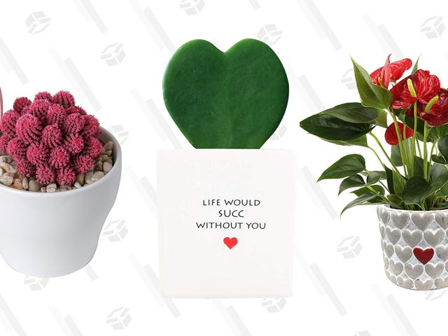 Give Your S.O. the Gift of Plant Life For Valentine's Day