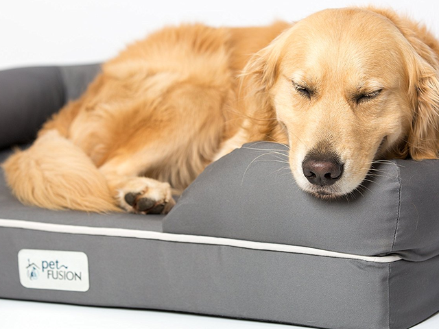 Treat Your Furry Best Friend To A Memory Foam Mattress