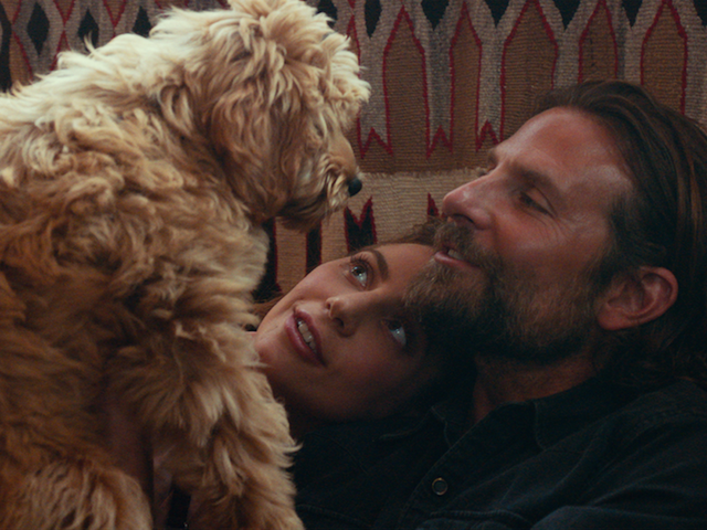 Bradley Cooper won't win a directing Oscar, but his dog is swimming in good boy awards