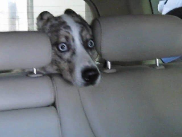 कार वॉश में डर