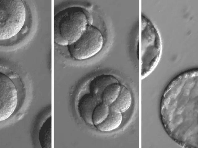 Εμπειρογνώμονες ζητούν από τις ΗΠΑ να ξεκινήσουν να χρηματοδοτούν επιστήμονες σε γενετικά μηχανικούς ανθρώπινα έμβρυα
