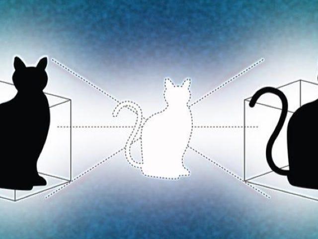 'Negara Kucing' Kuantum Baru Dapat Berada di Dua Tempat Sekaligus