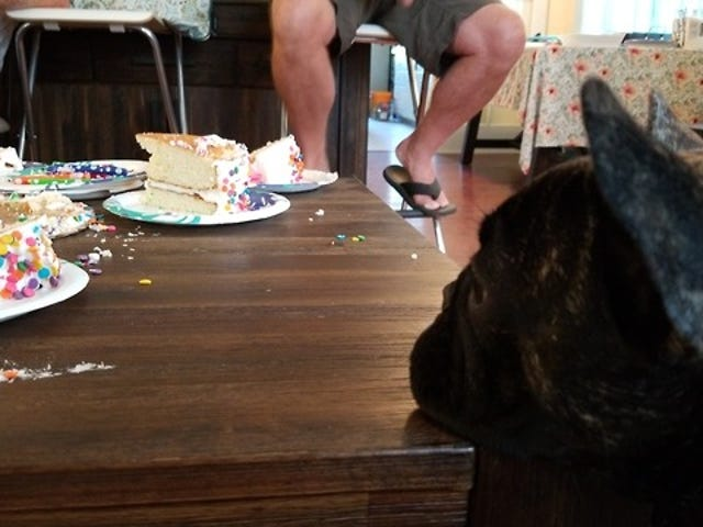 잘자, Sylvie는 doz 케이크 판을 원한다