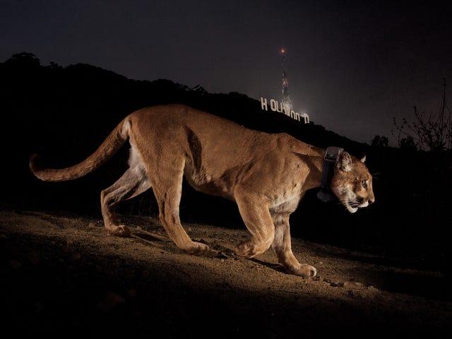 Інший знаменитості в Голлівуді йде на Wild Rampage