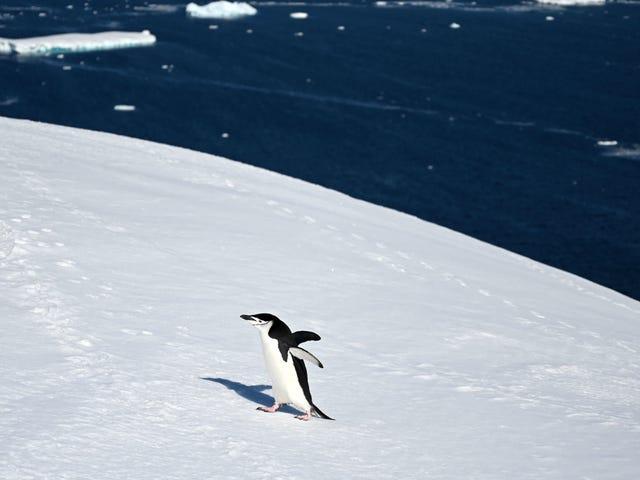 El derretimiento del hielo antártico puede haber alcanzado un máximo histórico en la víspera de Navidad
