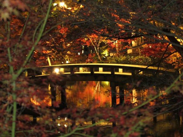 W listopadzie ubiegłego roku w świątyni Eikando