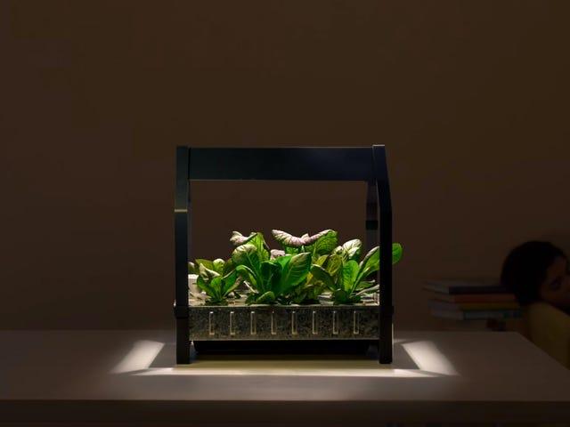 IKEA Keeps Getting Weirder, Now Sells Hydroponic Gardens