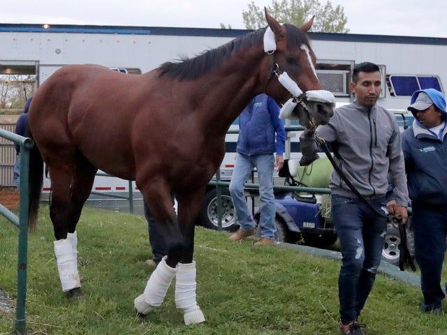 Кінь шукає правосуддя в суді