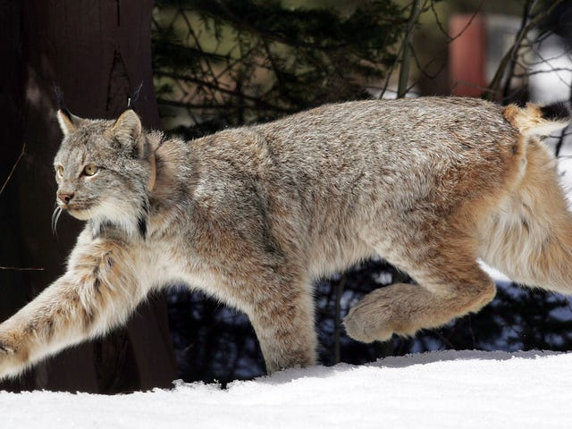 Report: One Third of America's Wildlife Is Now Under Threat