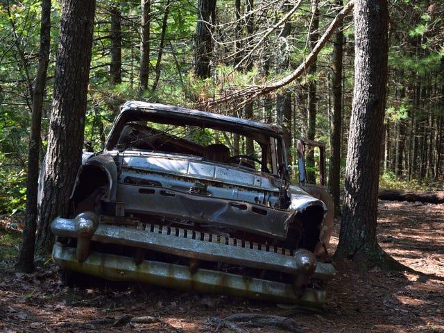 Bil i skoven