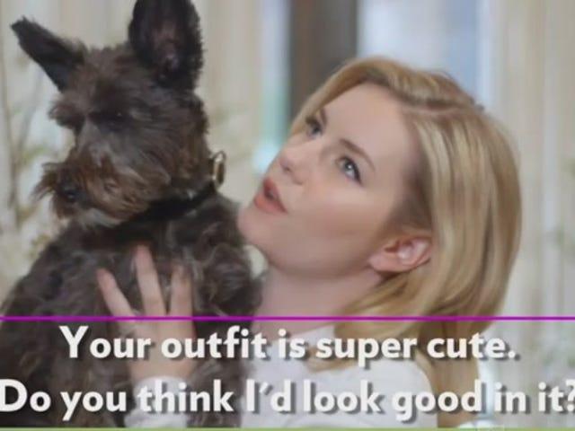 Vidéos d'animaux interrogeant leurs propriétaires célèbres ne sont pas fous du tout