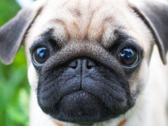 Dog Owners Fake-Cried So Researchers Could Confirm the Sweet Truth About Our Pups