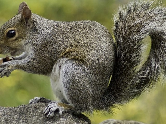 A Man's Love of Squirrel Meat Might Have Given Him a Horrifying, Fatal Brain Disease