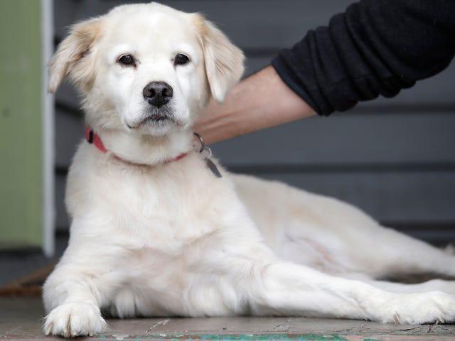 Den tyske mand udvikler dødelig infektion efter at være blevet slikket af sin hund