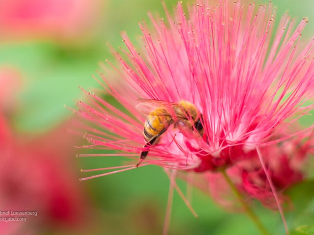 More Shooting With The Minolta Lens (UPDATED! Now With More Bees!)