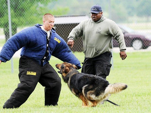 Un niño de 9 años lleva recaudados mile de dólares para equipar a los perros policía con chalecos antibalas
