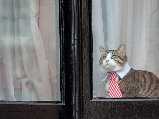 Конечно, история историй о симпатичной кошке Джулиана Ассанжа была лживой