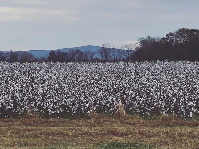 J'ai prêté attention aux champs de coton de l'Alabama pour la 1ère fois