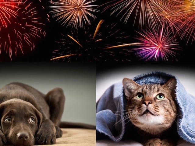 Qué hacer para calmar et nuestras mascotas en el temido fin de con los fuegos artificiales