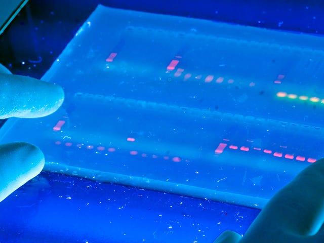 Un CRISPR modifié pourrait traiter les maladies courantes sans modifier l'ADN