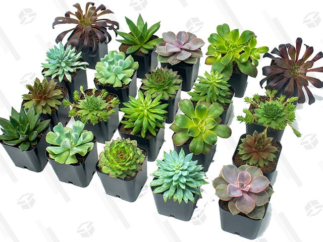 """<a href=https://kinjadeals.theinventory.com/amazon-will-make-you-the-proud-plant-parent-of-20-succu-1831652422&xid=17259,15700023,15700186,15700190,15700256,15700259,15700262 data-id="""""""" onclick=""""window.ga('send', 'event', 'Permalink page click', 'Permalink page click - post header', 'standard');"""">アマゾンはあなたをわずか36ドルで20人の多肉植物の誇りに思っている植物親にするでしょう</a>"""
