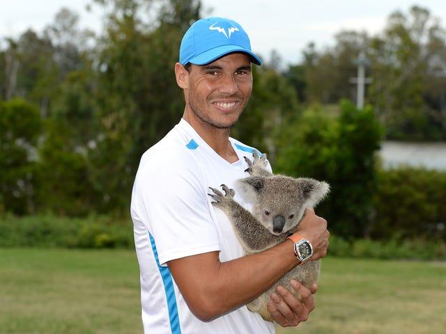 Just Rafael Nadal Holding A Koala