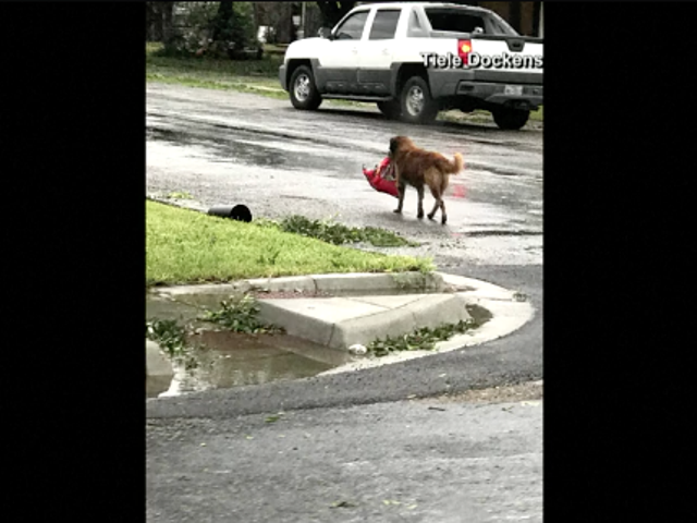 Saturday Night Social: Hosted By Hurricane Dog Bære en hel pose med hundemat