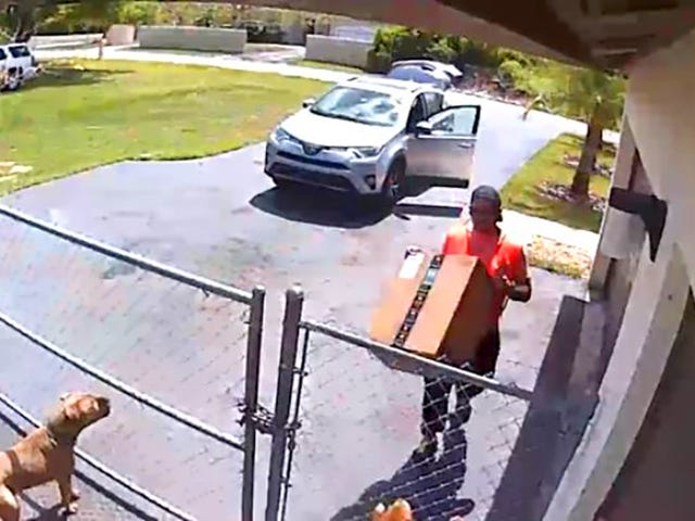 Amazon Delivery Driver Reportedly Fired for Squashing Puppy With Package